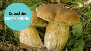 champignon nature a la loupe