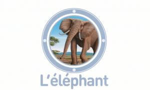L elephant animaux a a la loupe