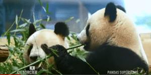 CPS panda