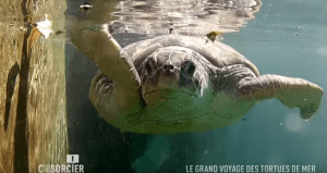 CPS Tortue